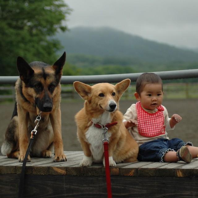 馬と犬と…