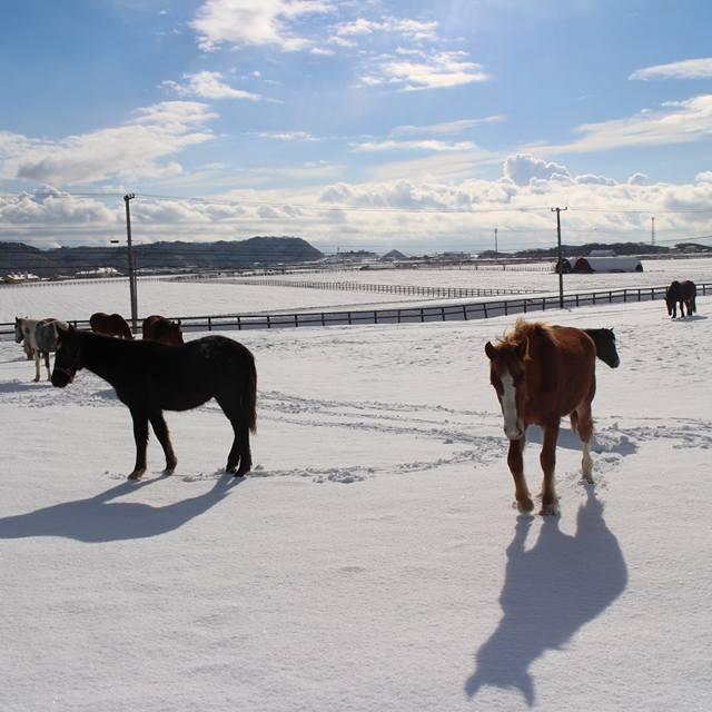 やっとの冬景色