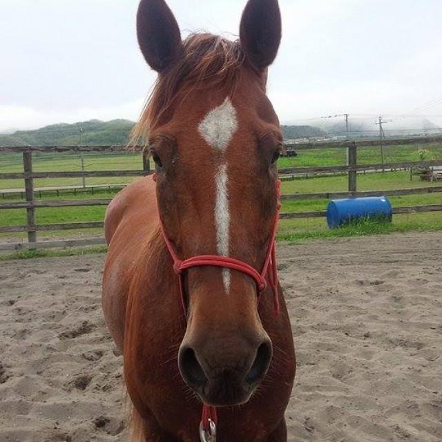 MKRanch最初の新馬調教
